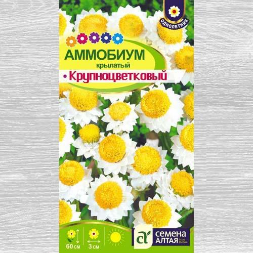 Аммобиум крылатый Крупноцветковый