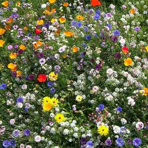 Декоративная смесь Цветочный мед, смесь окрасок