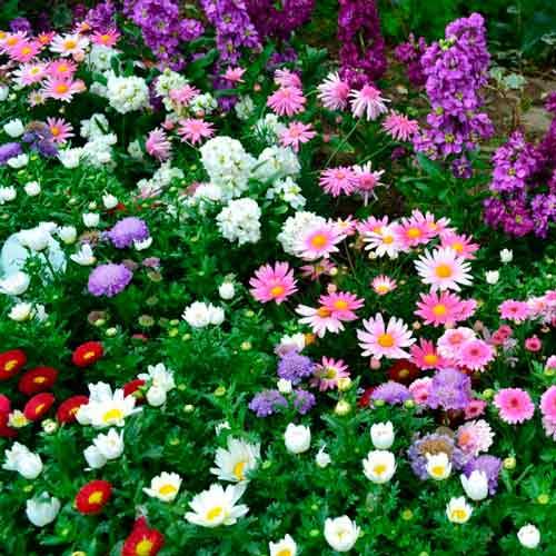 Декоративная смесь  Цветущая клумба, смесь окрасок