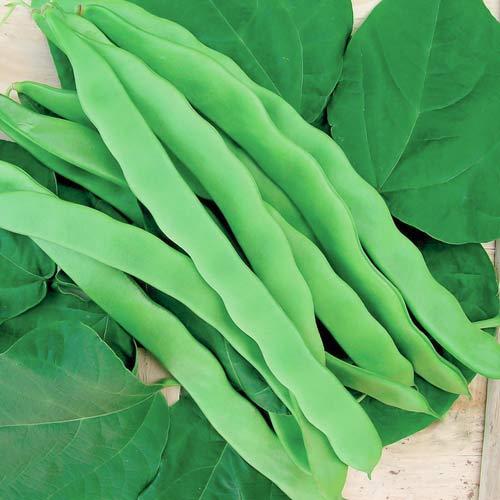 Фасоль овощная Сахарная лопатка