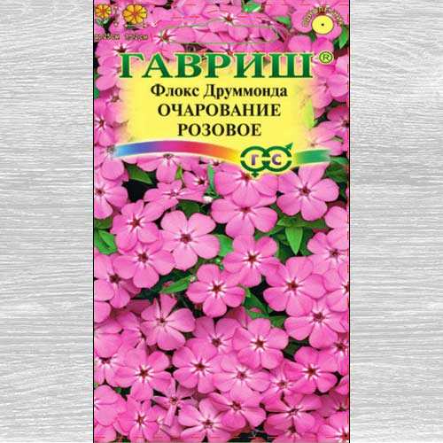 Флокс Друммонда Очарование розовое