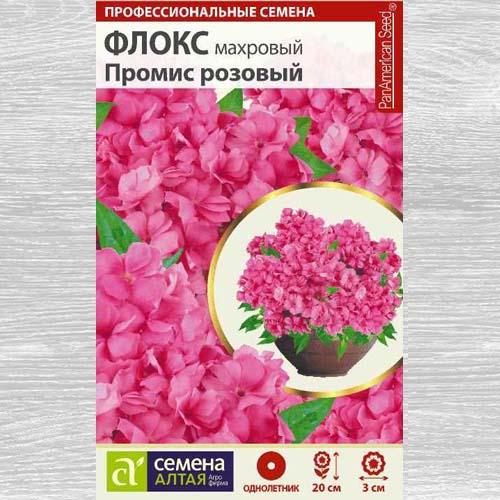 Флокс махровый Промис розовый