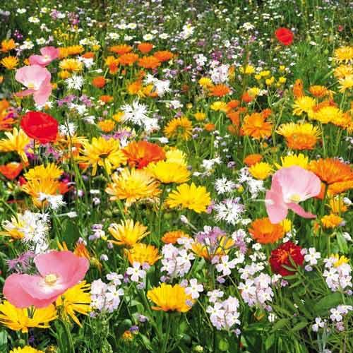 Газон цветущий Душистый луг, смесь окрасок