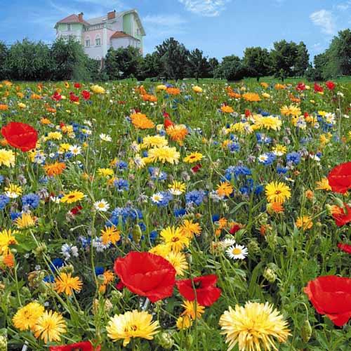 Газон цветущий Коттедж Гарден, смесь окрасок