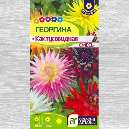 Георгина Кактусовидная, смесь окрасок