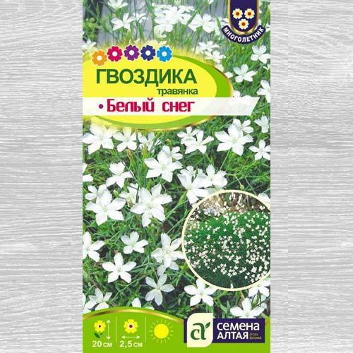 Гвоздика травянка Белый снег