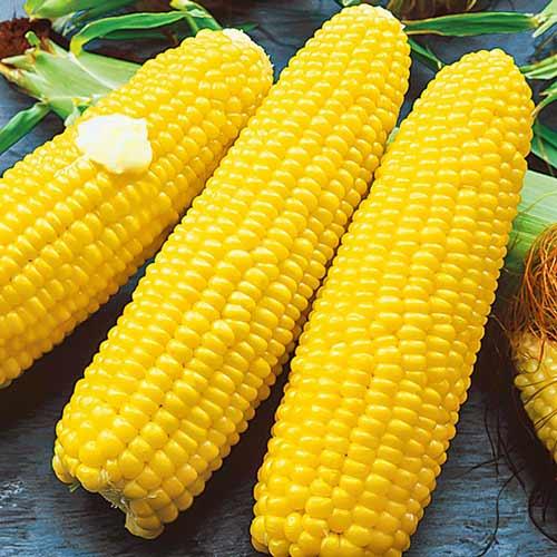 Кукуруза сахарная Медовая