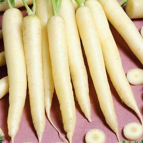 Морковь Белая королева