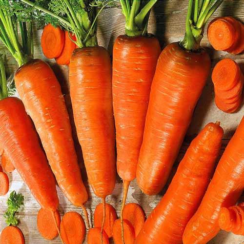 Морковь гранулированная Королева осени