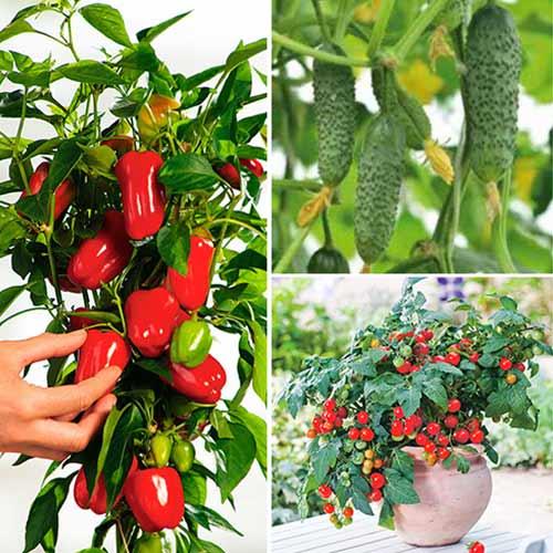 Набор Новогодний Урожай, смесь семян