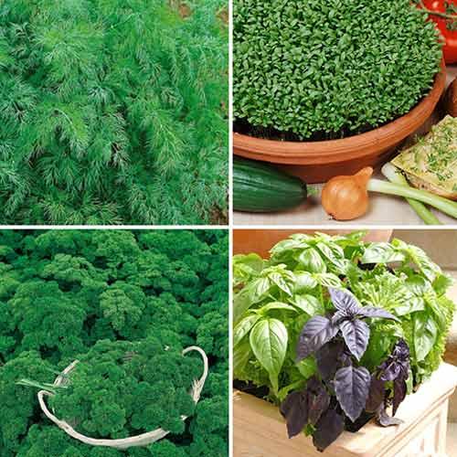 Набор зелени Ароматный Беспредел, смесь семян