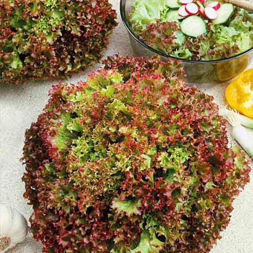 Салат Яркие витаминки , смесь семян